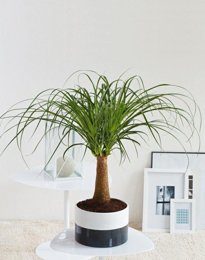 sch ne zimmerpflanzen so dekorieren sie ihr zuhause mit pflegeleichten pflanzen elefantes y. Black Bedroom Furniture Sets. Home Design Ideas