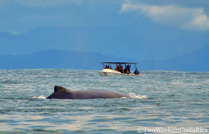Whale Watching Tour in Costa Rica | Two Weeks in Costa Rica