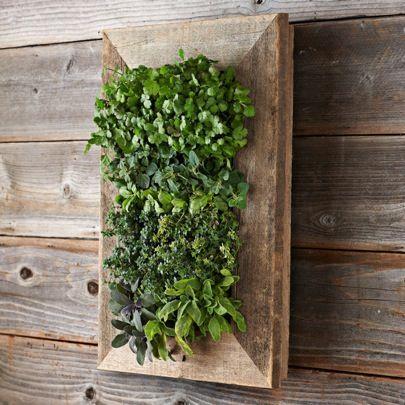 Living Wall Planter Herbsreclaimed Barn Door Vertical Wall Planter ...