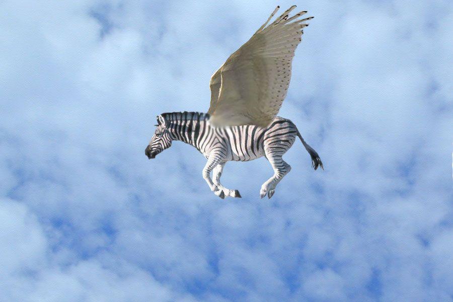FLYING ZEBRA by RowlinRocks