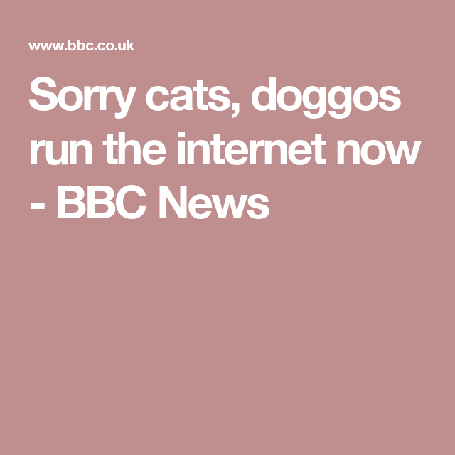Sorry cats, doggos run the internetnow - BBC News