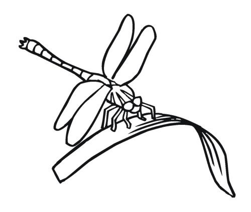 Free Printable Dragonfly Coloring Pages Warna