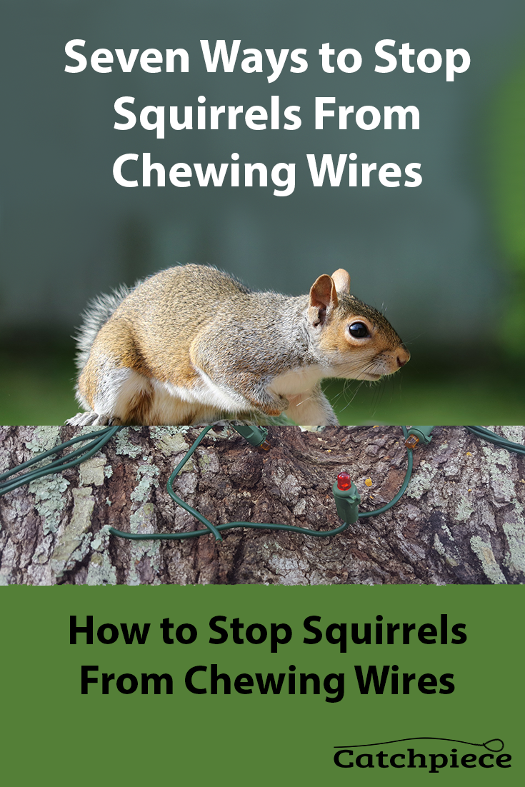 How To Get Rid Of Squirrels In My Ceiling