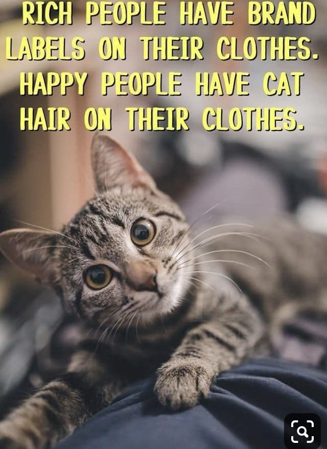 Pin by Pam gambill on Cat Cats, Cat quotes funny