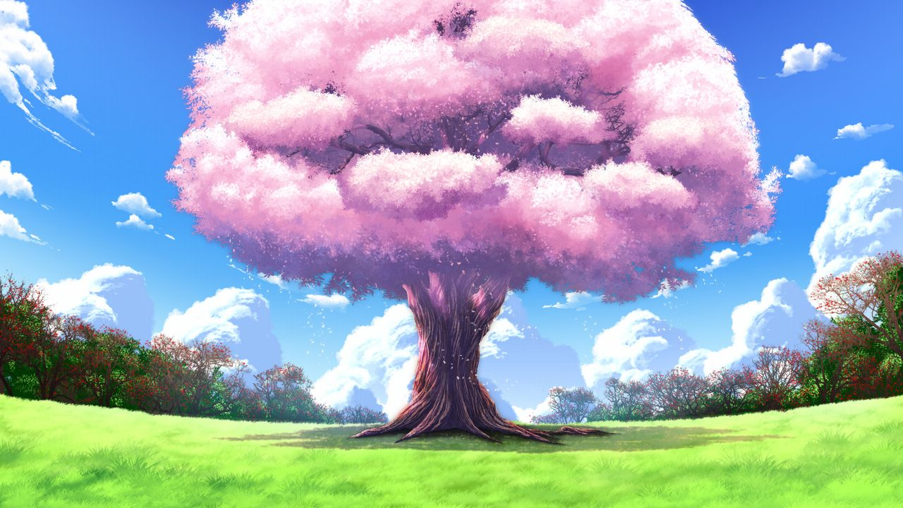 Cherry Blossoms Clouds Fortissimo Akkord Bsusvier Game Cg Grass Landscape Nobody Scenic Anime Backgrounds Wallpapers Anime Scenery Wallpaper Anime Background