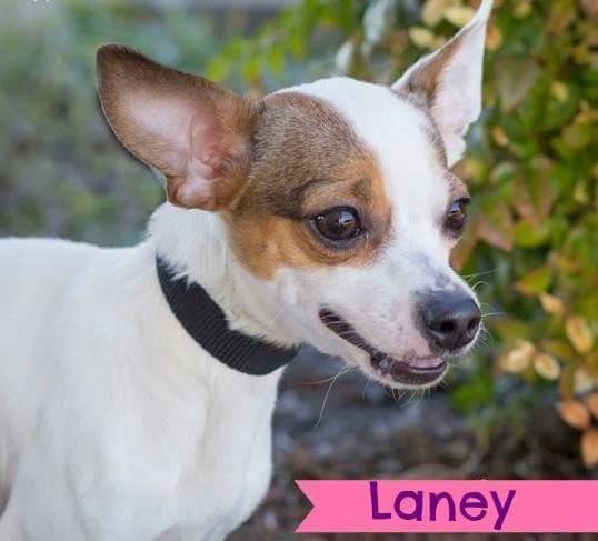 Adopt Laney On Animals Animal Rescue Animal Shelter