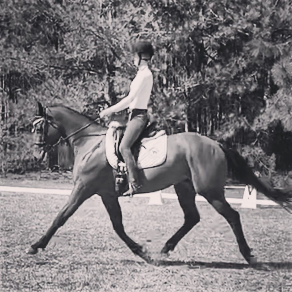 Canadian Sport Horse in 2020 Sport horse, Horses