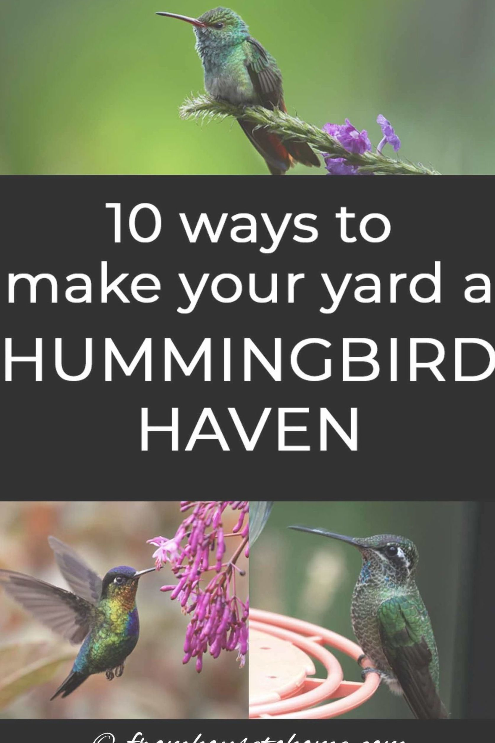 Attracting Hummingbirds To Your Garden Is Not As Difficult As It Might Seem Find Out Which How To Attract Hummingbirds Humming Bird Feeders Hummingbird Plants