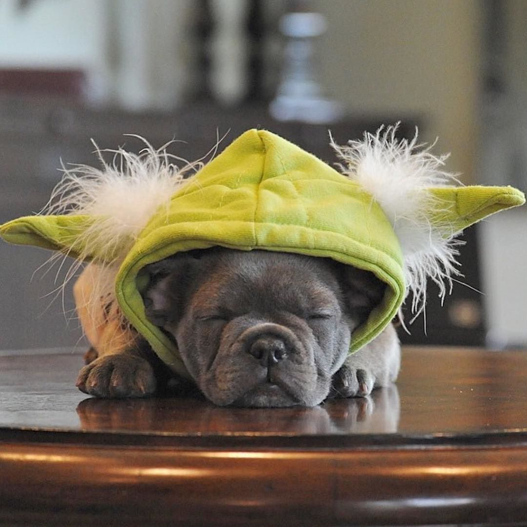 Do or do not. There is no try. Baby Frank.