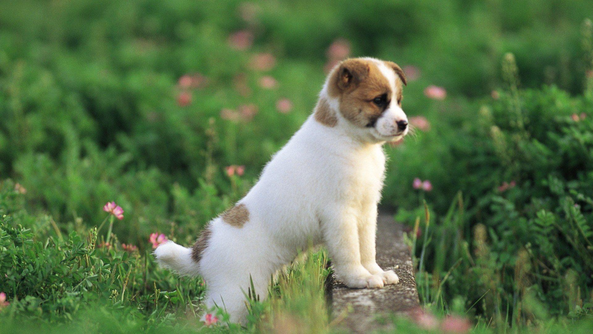 puppy power animals Pinterest