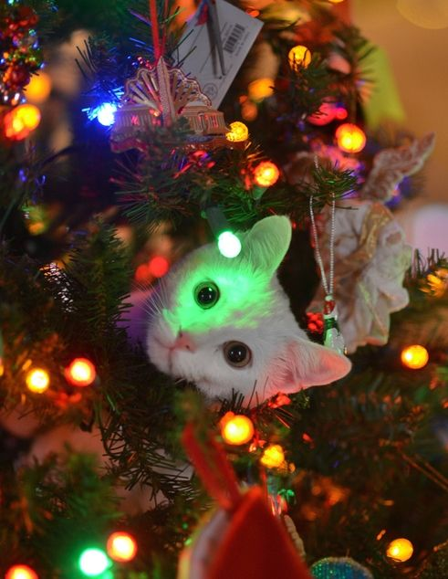 Keep Your Cats Out Of The Christmas Tree Plus Some Decorating Precautions To Keep Kitty Safe Christmas Cats Christmas Animals Pets