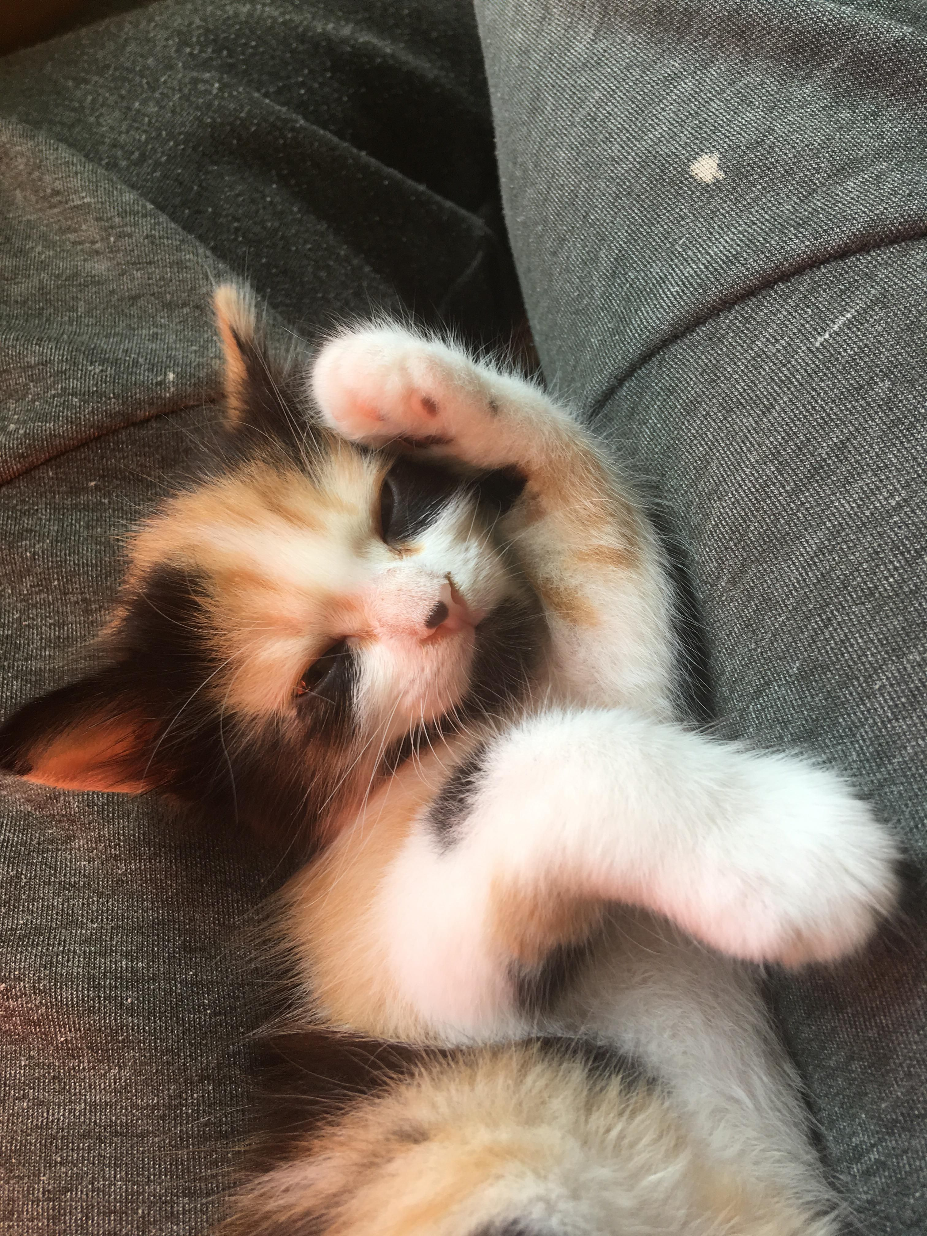 Just Got Her This Week And I Would Do Anything To Protect Herhttps I Redd It Nzdo4vf7y6o31 Jpg Funny Cat Memes Cute Cats Cat Pics