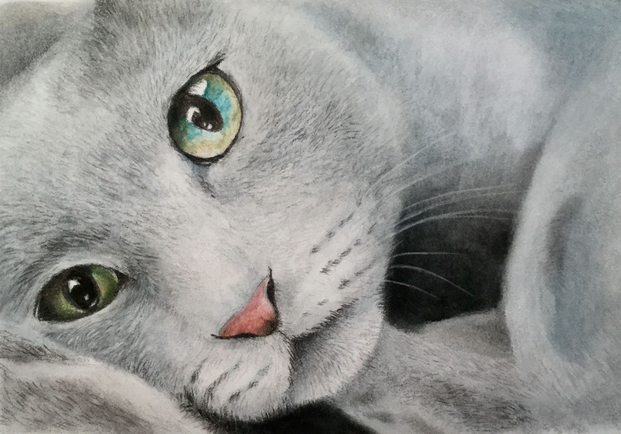 Colored Pencil Russian Blue Cat Jane Mcmaster Affectionatecatsbreeds In 2020 Russian Blue Pretty Cats Russian Blue Cat