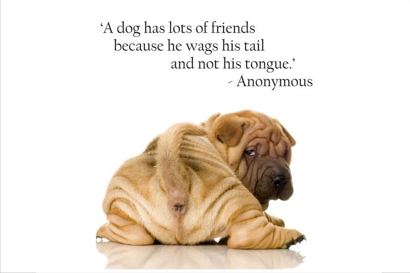 Pet Mom Quotes Quotesgram Dog Quotes Funny Dog Signs Pet Mom Quotes