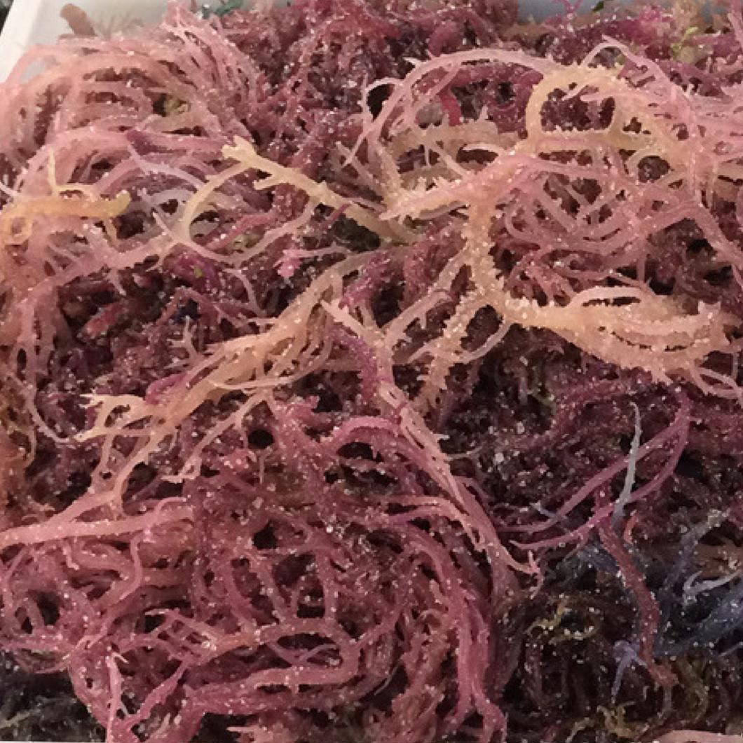 Purple Sea Moss Wildcrafted Raw Sun Dried Irish Moss 1 4 Lb 113g Sea Moss Irish Moss Sea Vegetables