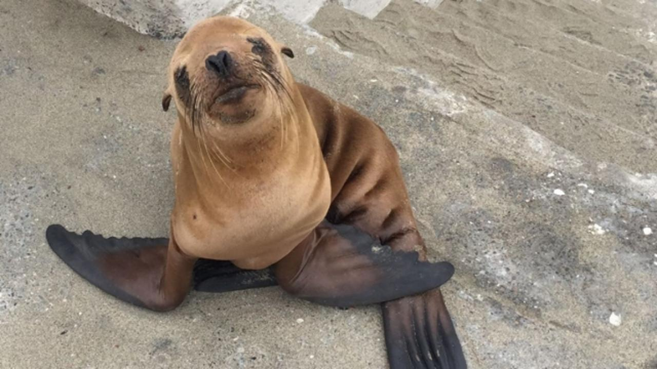 As Animal Fanatics We Love When We Hear Stories About Animals Getting Rescued It S Just The Best Thing Ever And This Is One Of Tho Baby Sea Lion Sea Lion