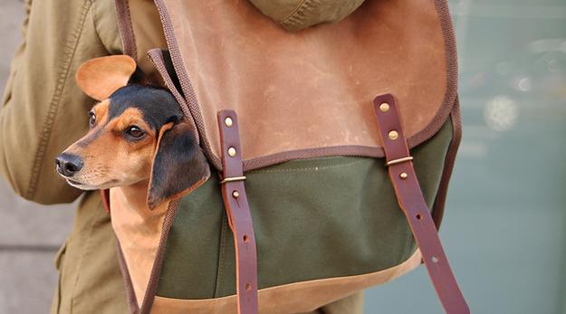 pernas do seu cão pode ser muito curto para passear todos os dias, mas eles ainda querem vir: mochila dele. | 41 Insanely Clever Products Your Dog Deserves To Own