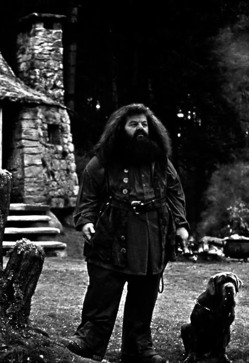 HARRY P0TTER Harry potter, Rúbeo hagrid, Hogwarts
