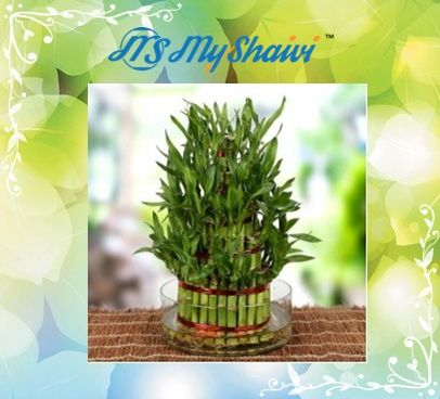 Myshaivi Provides Best Whole Online Facility Of All Types Plants