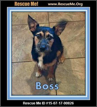 New Jersey Yorkie Rescue Adoptions Rescueme Org Puppy Adoption Yorkie Yorkie Dogs