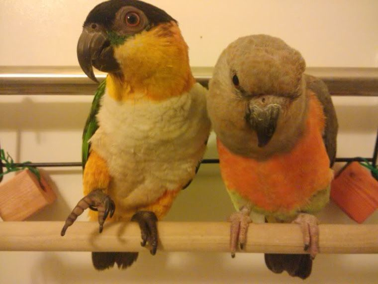 Parrot Foraging and Fun Oiseaux
