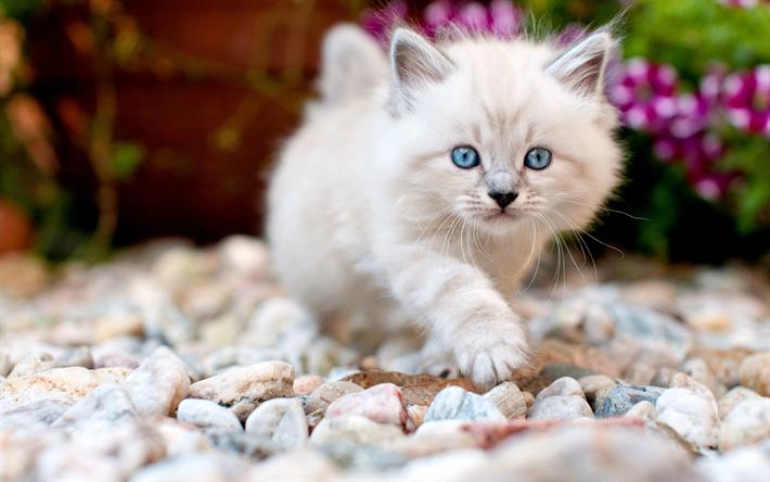 Download Wallpapers White Fluffy Kitten Little Cute Cat Pets