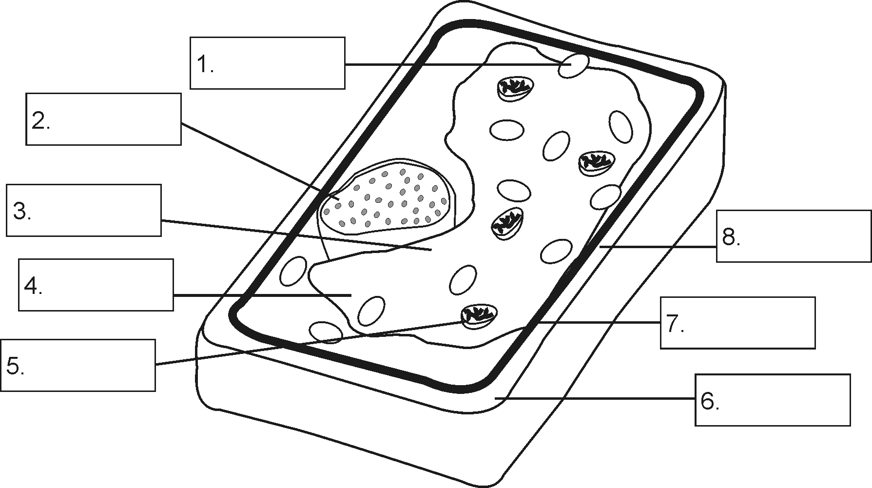 Plant Cell Coloring In Addition Free Printable Parts Worksheet Sketch Page
