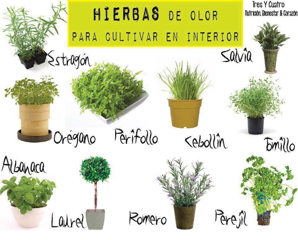 Plantas para cultivar en casa mi jard n pinterest for Plantas para mi jardin
