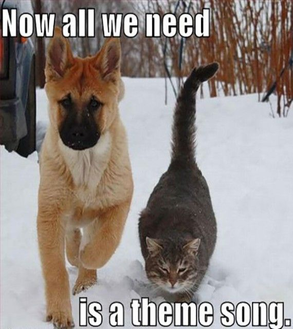 Top 30 Funny Dog And Cat Pictures With Captions Funny Dog Pictures Funny Cat Memes Funny Animals