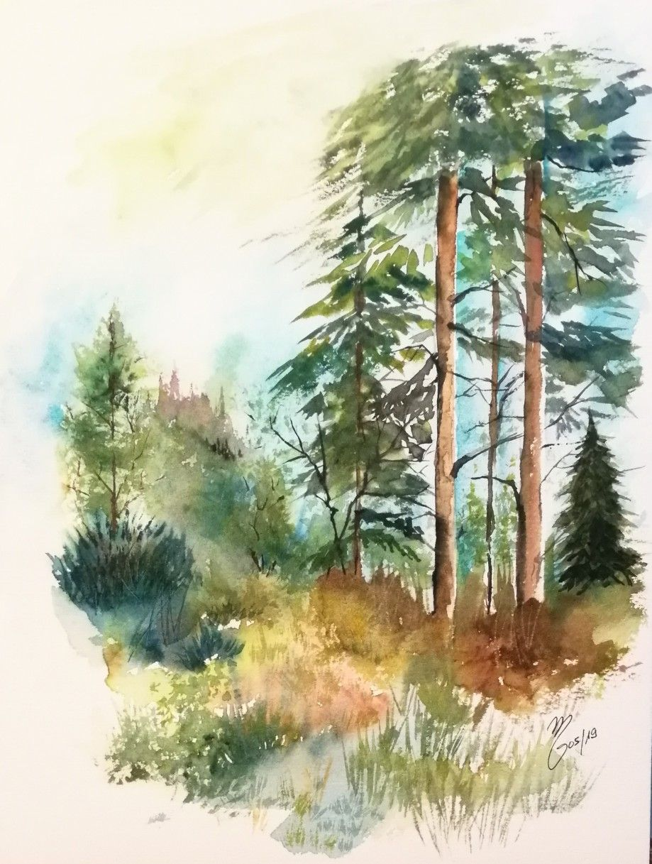 Aquarelle Foret Arbres Sapins Nature Forest Trees