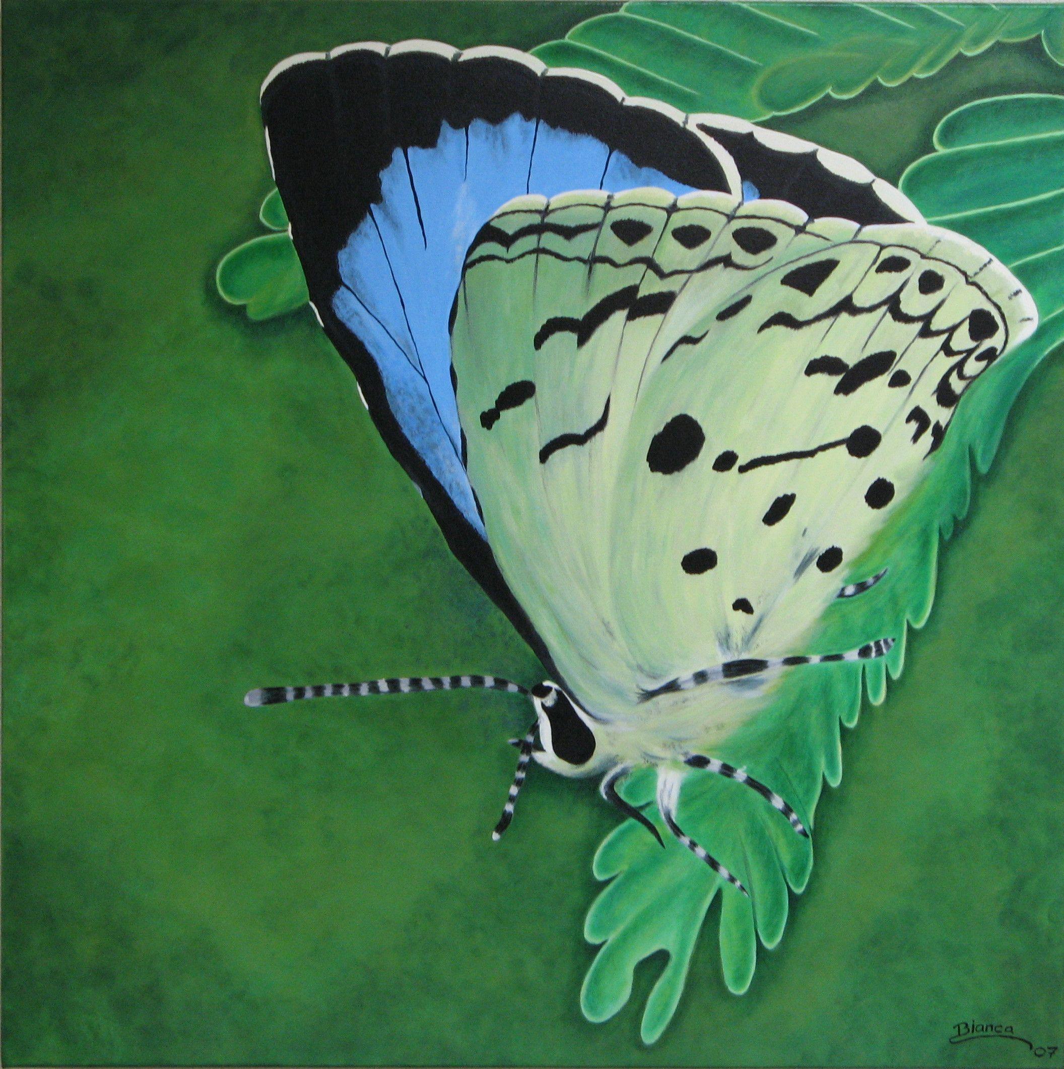 Mijn vlinder..