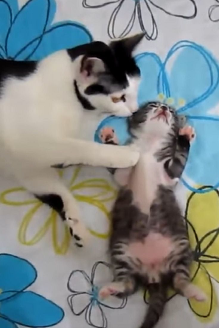 Tiny Kitten Was Having A Bad Dream Now Keep Your Eyes On Mommy Adorable Video Kitten Cats Pets Animals Cat Having Kittens Cats And Kittens Buy A Cat