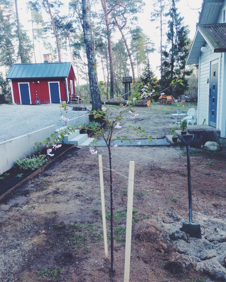 Hoppas du får växa och bli stor! Accoladeträd.