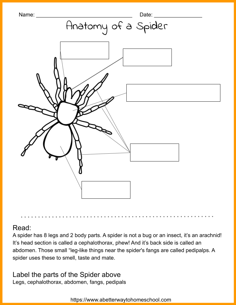 Spider Ideas For Your Kids Spider Crafts Spider Incredible Creatures