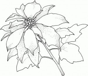 Poinsettia Flower Coloring Sheet | Christmas coloring ...