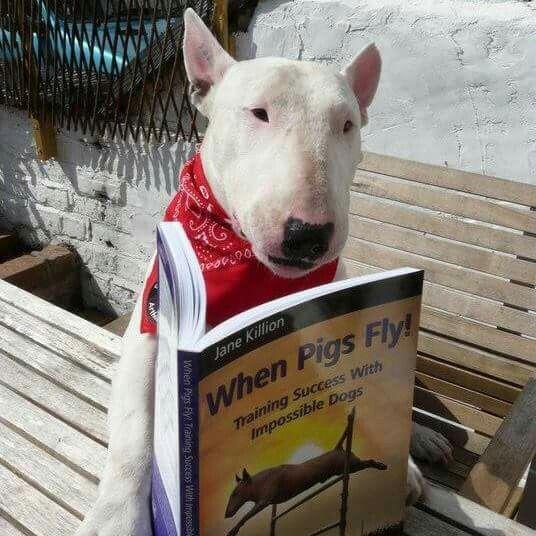 Bull Terrier Interesting Reading Matter Bull Terrier Funny