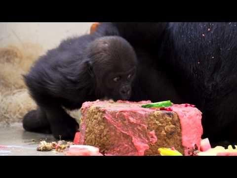 Happy Birthday Gladys See Her Enjoy 1st Cake