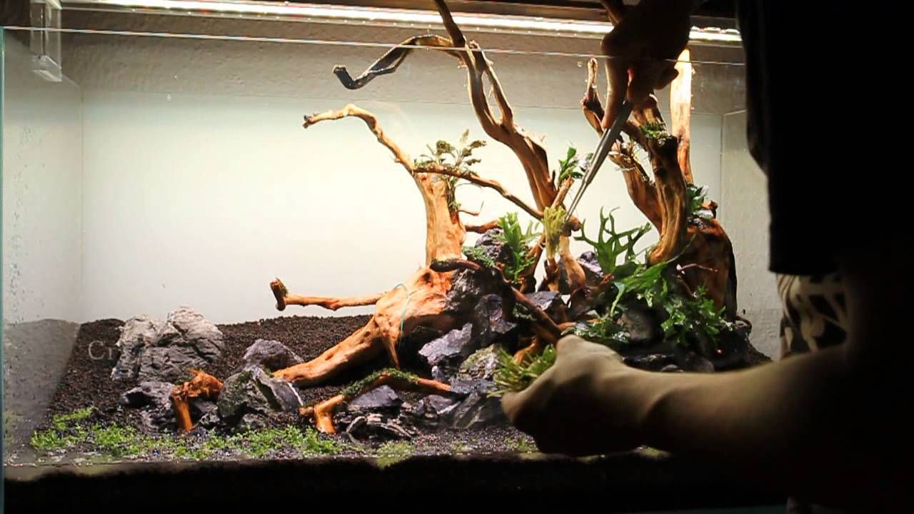Aquascape Step By Step Video In A ADA 90P With Redmoor Wood And Seiryu