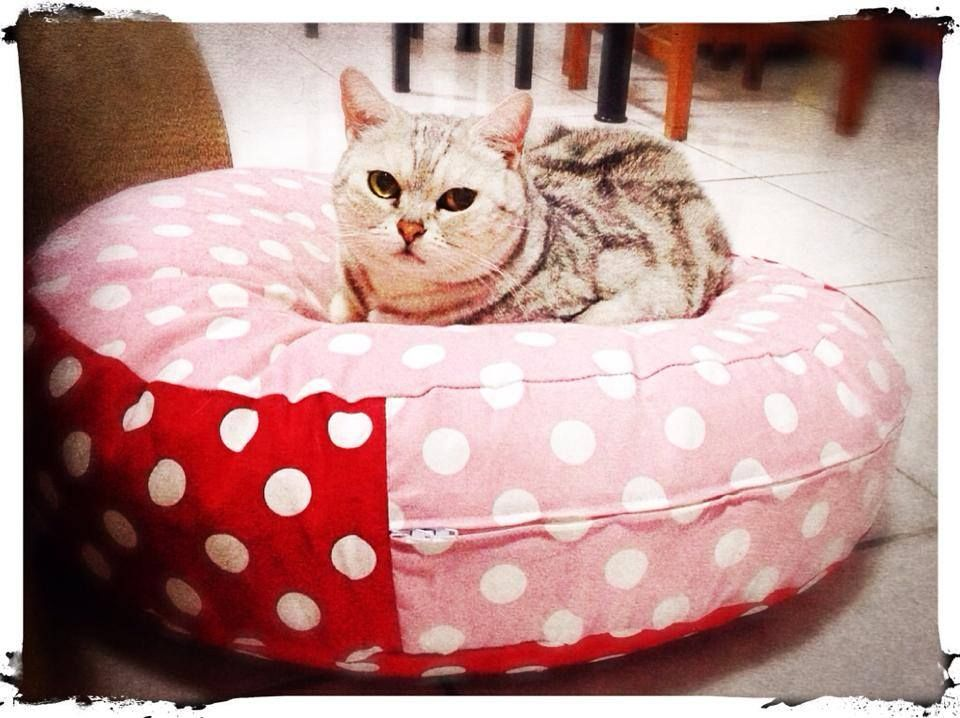 Outstanding Pin By Kevin Lin On Cat Bed Bean Bag Chair Bed Cats Interior Design Ideas Clesiryabchikinfo
