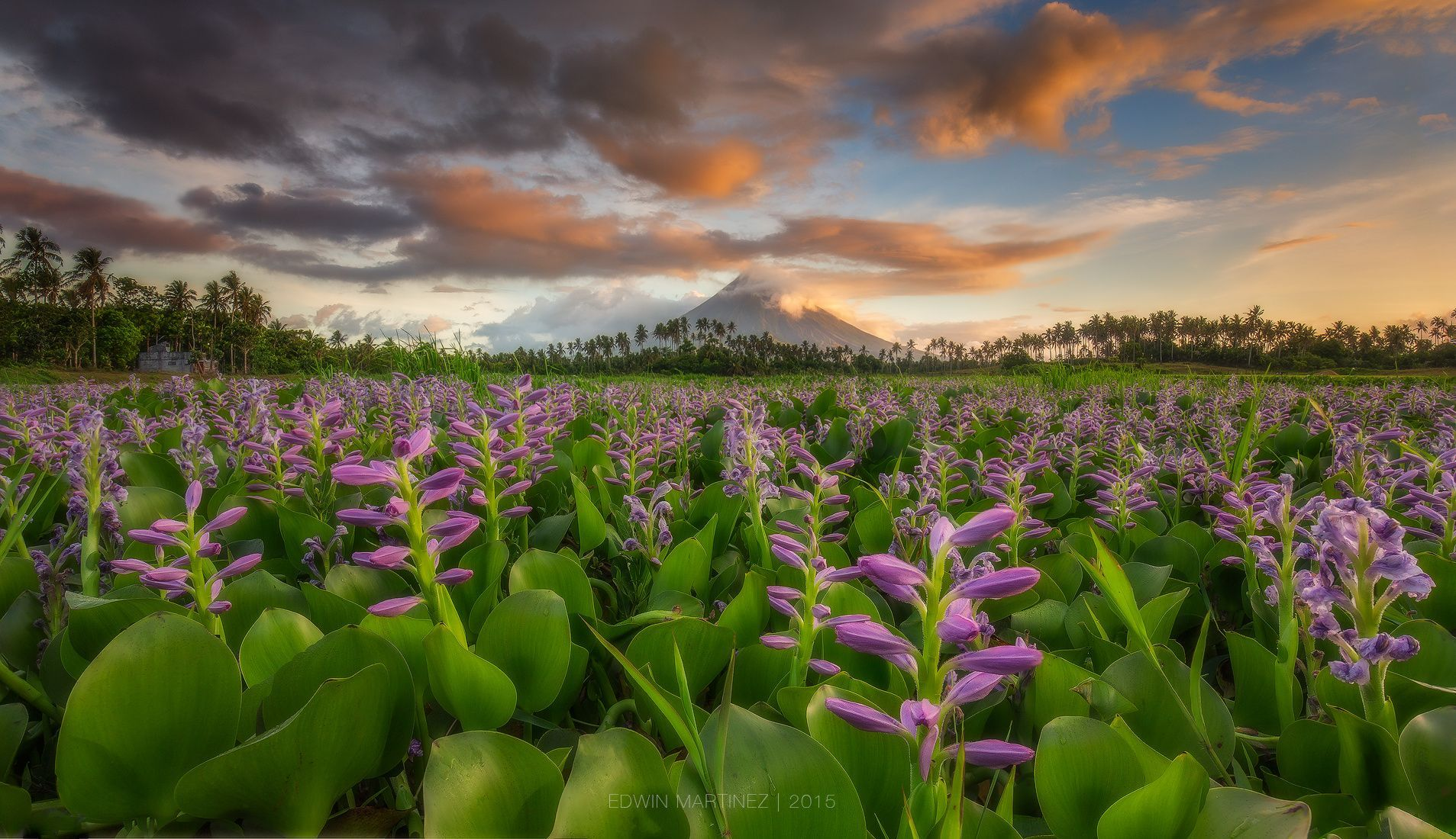 Field of Dreams by Edwin Martinez on 500px