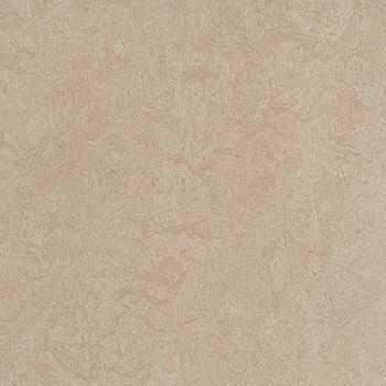 silver birch linoleum?