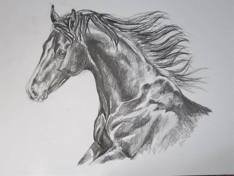 Лошади картинки красивые карандаш каждый