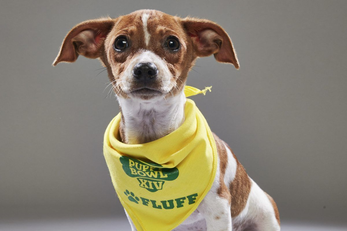 Animal Planet S Puppy Bowl Xiv To Feature Four Philly Dogs