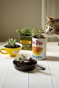 kitchen_succulents7