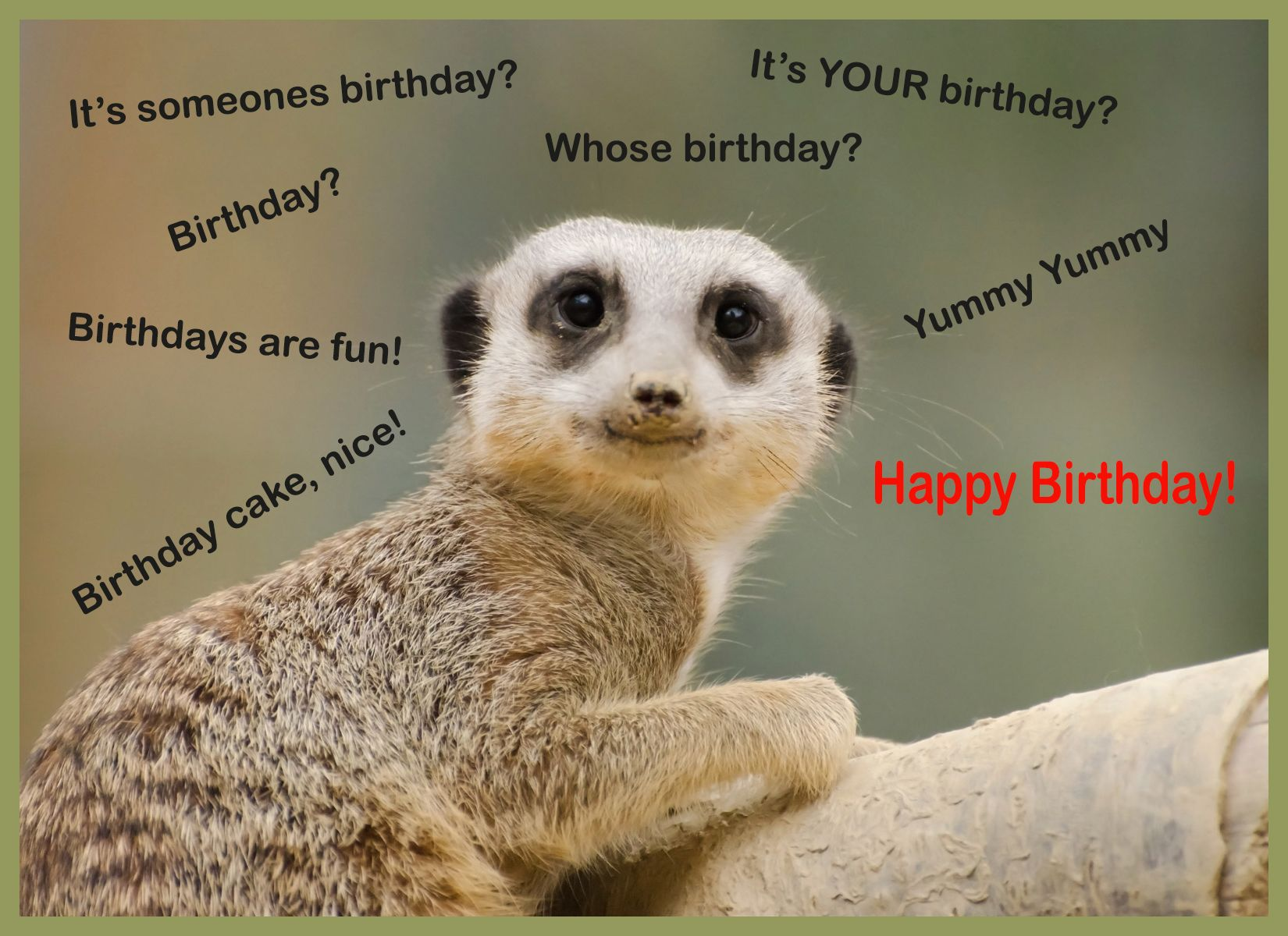 Male Birthday Cards Funny ~ Funny animals happy birthday funny animalsl funny animals