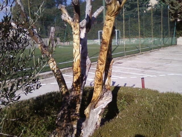 albero di limone scolpito