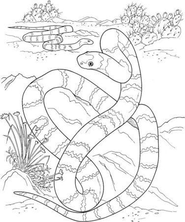 Gran Serpiente Larga En El Desierto   Coloring / Colorear ...