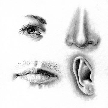 Realistic Pencil Drawing Of An Eye Nose Mouth And Ear Eye