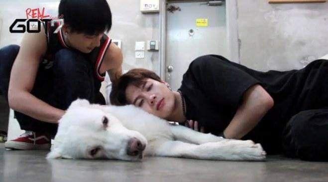 got7 dog by 𝕻𝖚𝖕𝖕𝖞ヅ ♡᭙ꪖꪀᧁ