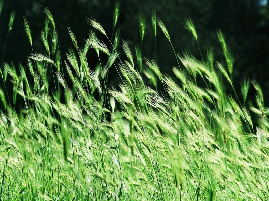 Kesä - taustakuvat kuvia: http://wallpapic-fi.com/luonto/kesa/wallpaper-28474